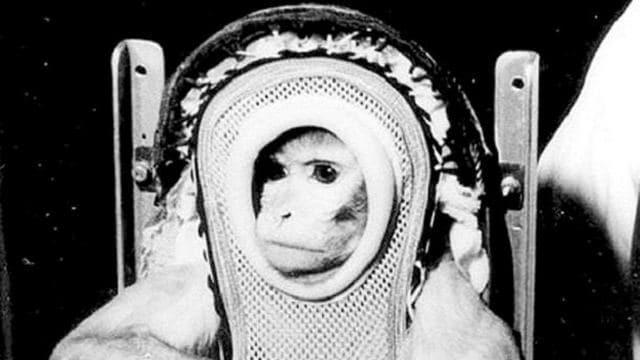 Meet Albert II – The First Monkey In Space
